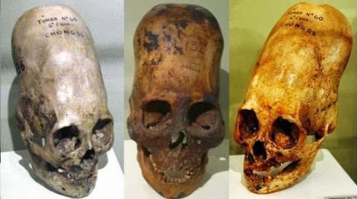 Cráneoselongados